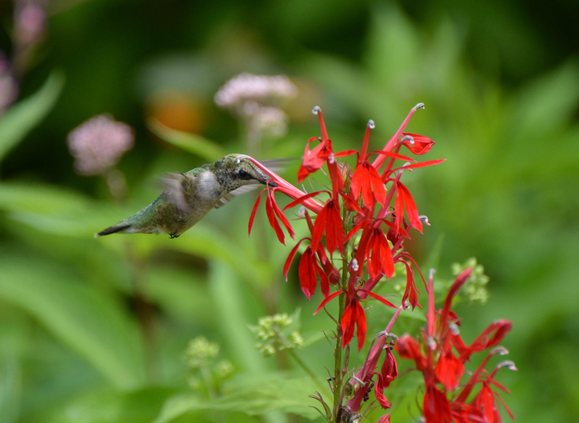 Habitat Gardening in Central New York