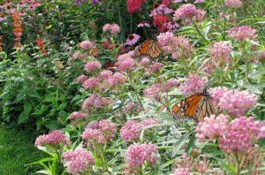 Monarch Waystation